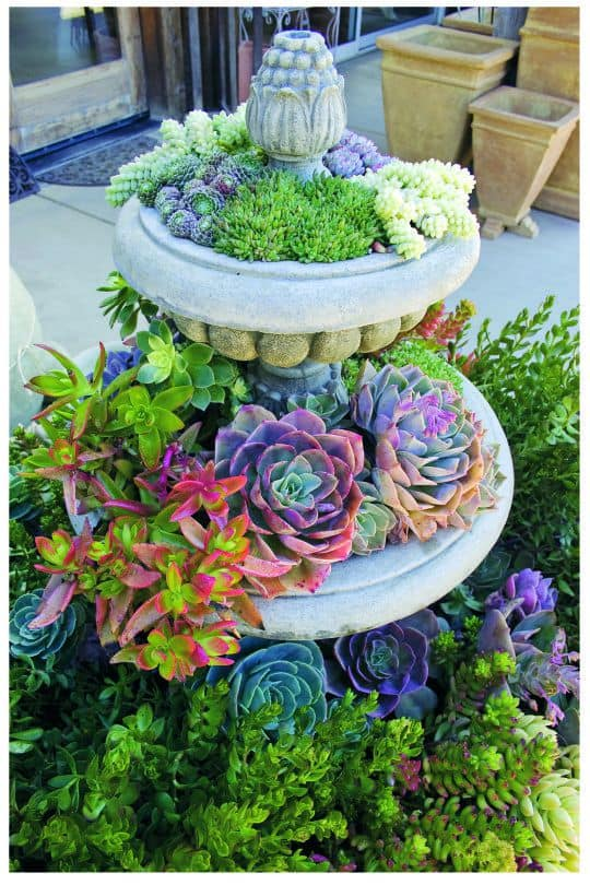 COLORFUL SUCCULENTS curb appeal