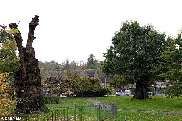 Research into Dutch elm disease resistant strains appears to be paying off, a recently-released report form the Future Trees Trust has noted. Pictured, such developments were sadly too late to save one member of the Preston twins, which contracted the disease earlier this year