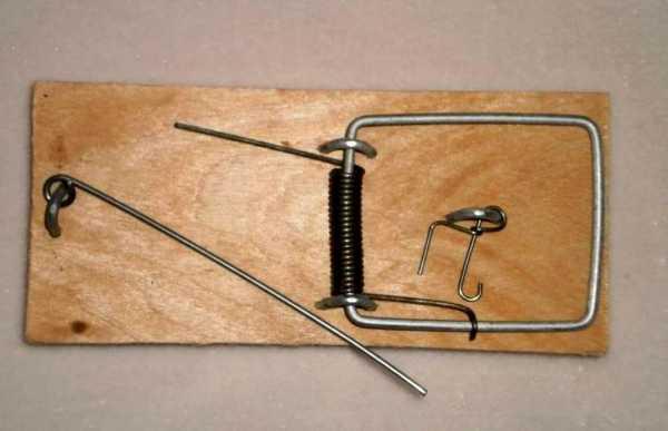 Как взвести мышеловку – Как зарядить мышеловку и правильно ее поставить — Главная страница
